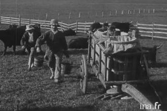 La fabrication du cantal dans les burons en 1927